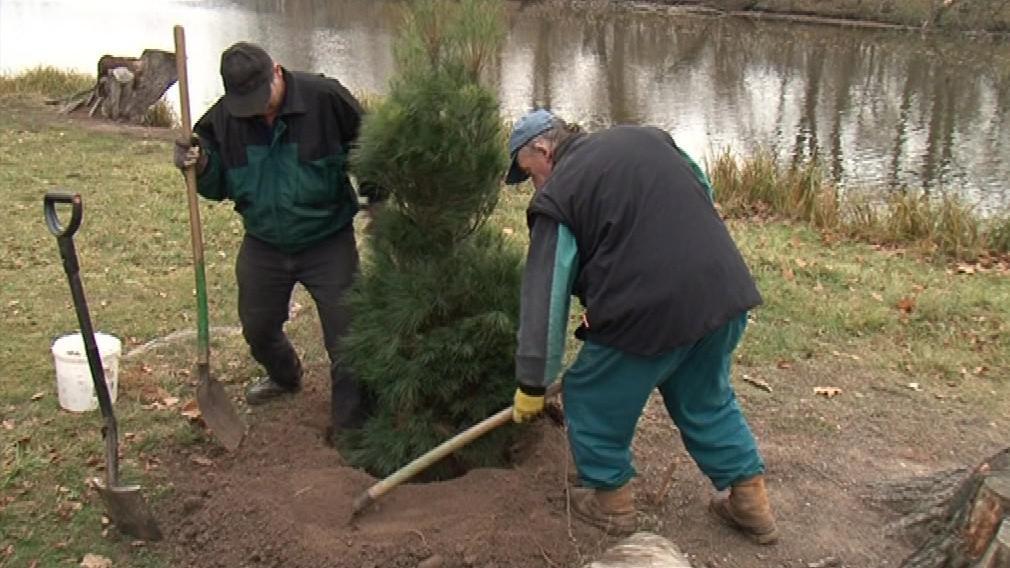 Asi tisícovka nových stromků má nahradit ty staré vykácené