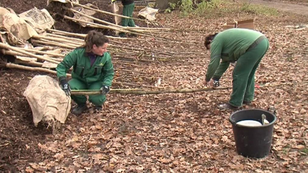Pracovníci parku budou vysazovat především duby