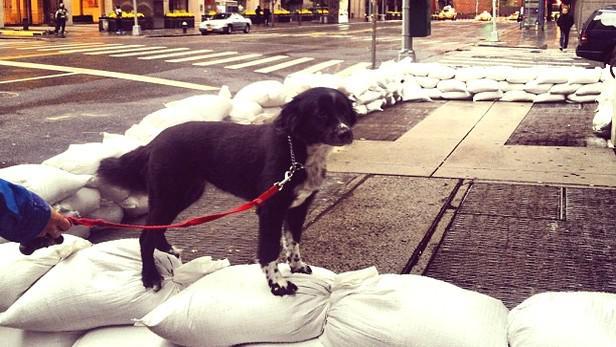 Příprava na příchod hurikánu Sandy