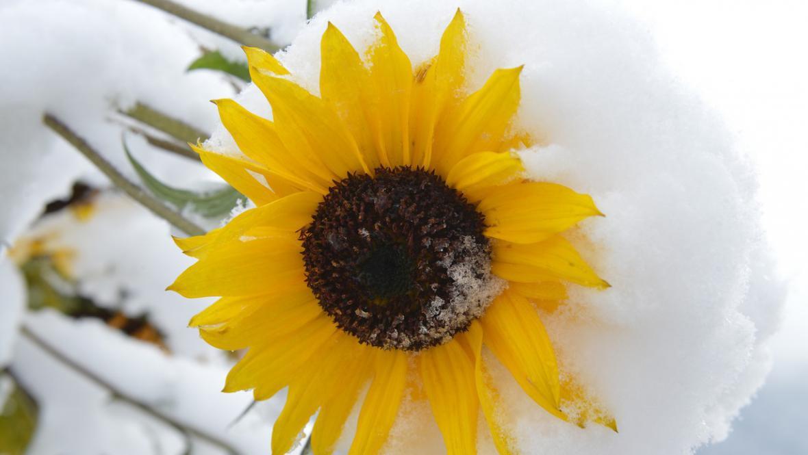 První sníh přišel nečekaně brzy