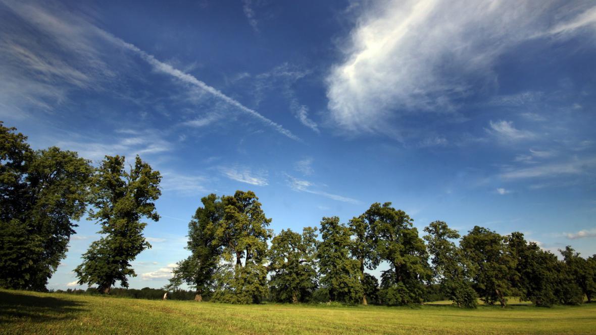 Stromem roku 2012 je lípa z Novodvorské aleje na Blanensku