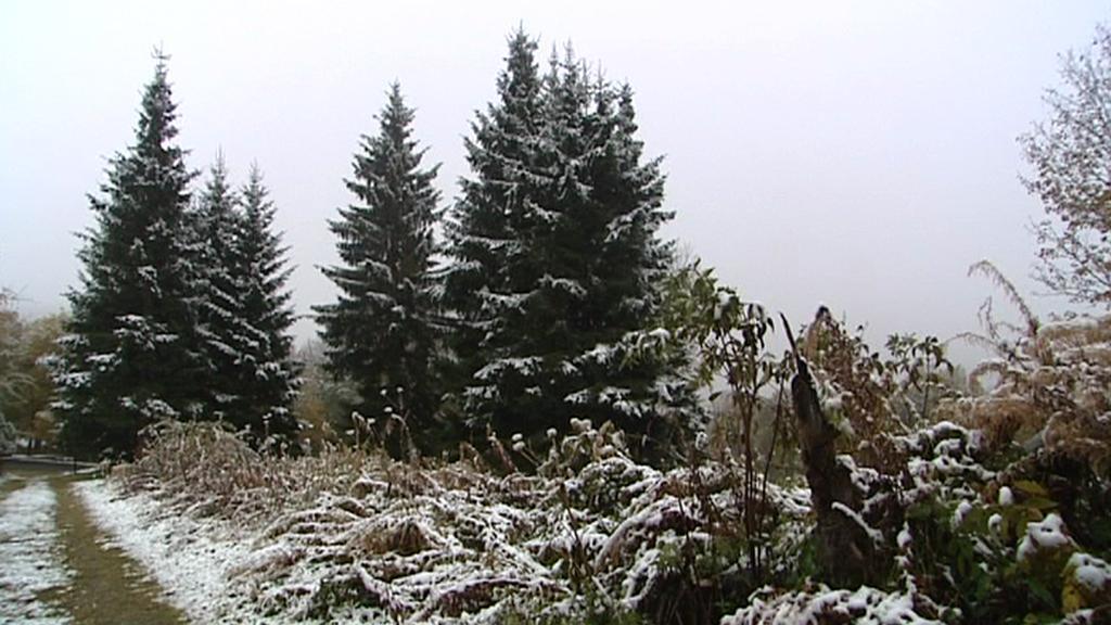 Šumava přivítala první letošní sníh