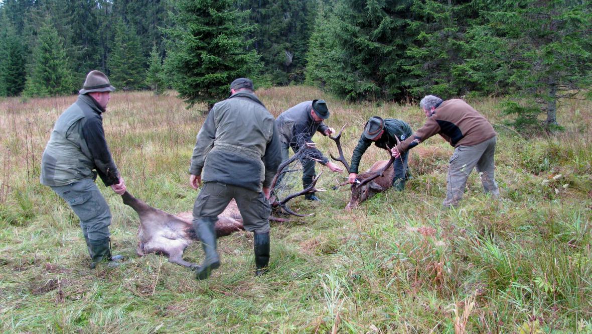 Lesníci se snaží oddělit jeleny