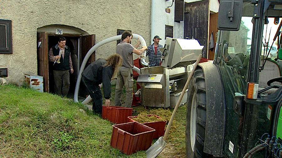 Vinařům ze Šaldorfu se nelíbí změny územního plánu