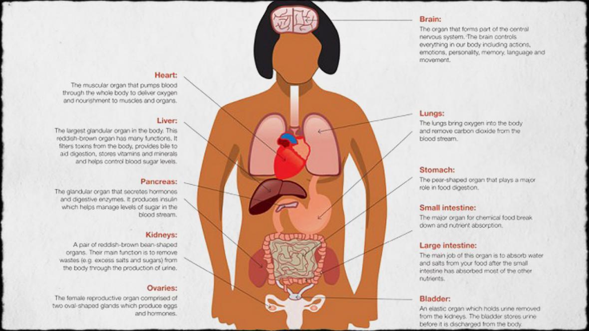 Zfušovaný anatomický plakát australské vlády