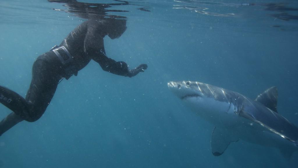 Mike Rutzen alias Sharkman