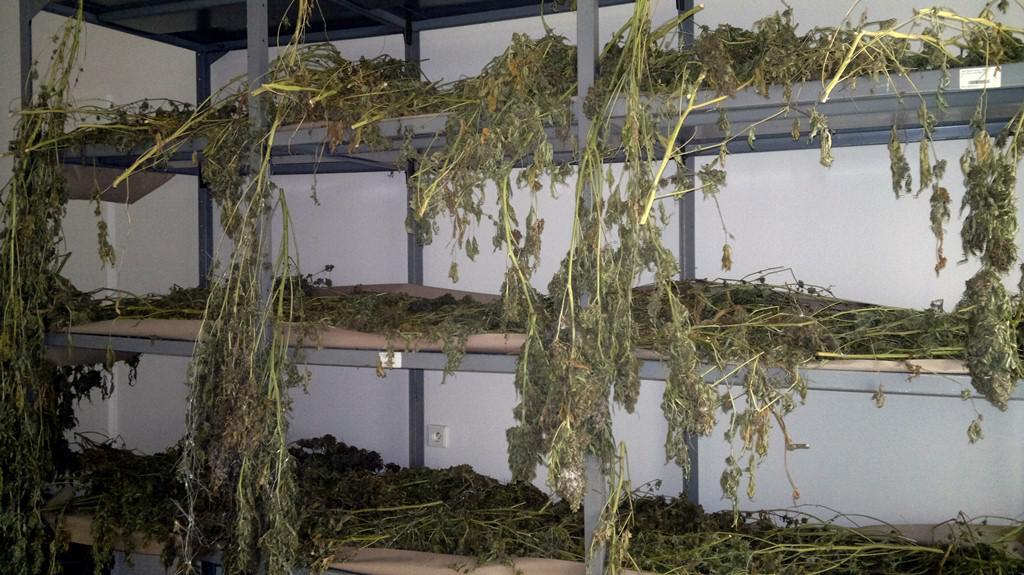 Pěstírna marihuany na Broumovsku