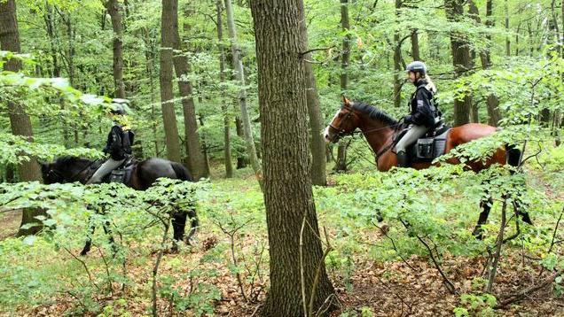 Chlapce hledali policisté v okolních lesích