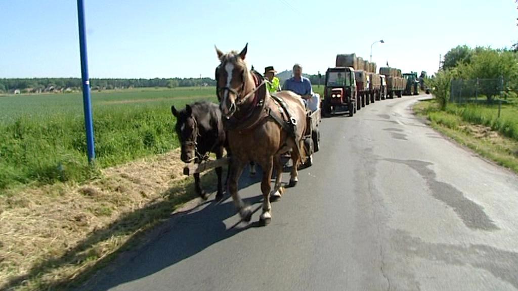 Koně na silnici