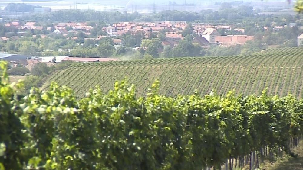 Moravské víno už může nést označení Bio