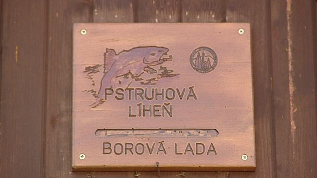Líheň ryb v Borové Ladě
