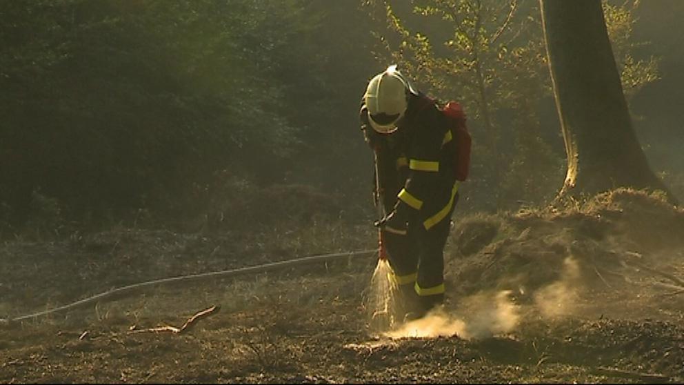 Hasiči prolévají lesní půdu zasaženou požárem