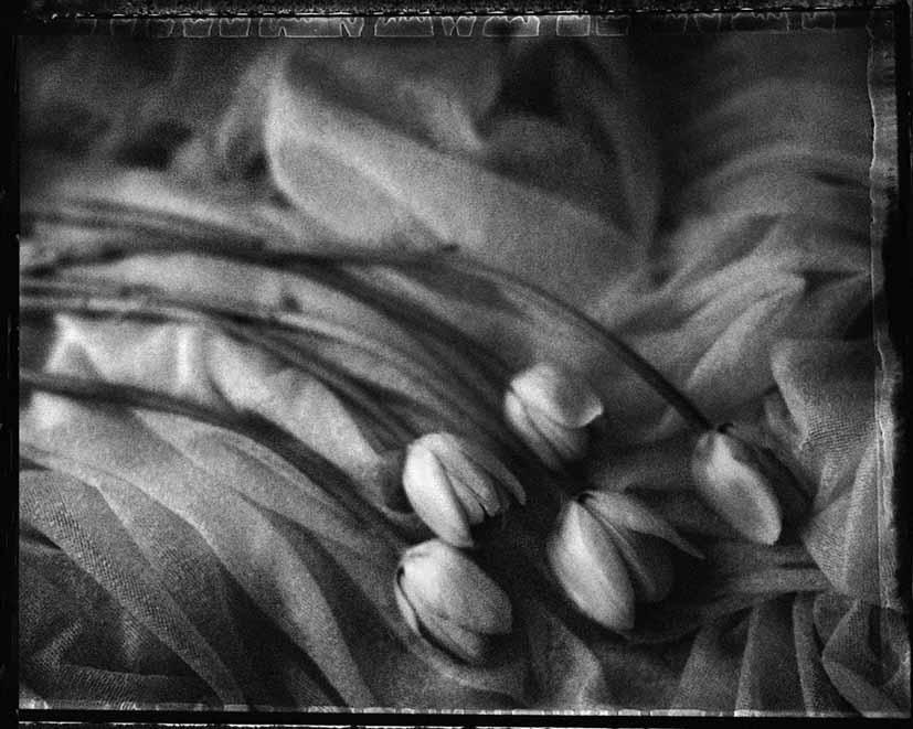 Robert Vano - Tulips, Praha 2004