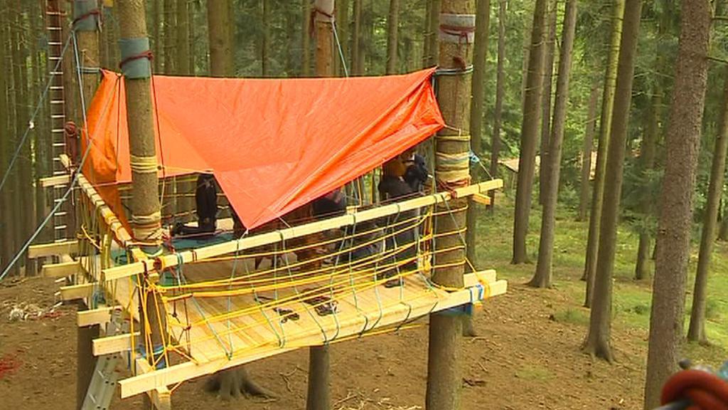 Netradiční domek mezi kmeny stromů