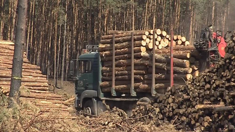Vozy odvážejí z Bzence pokácené stromy