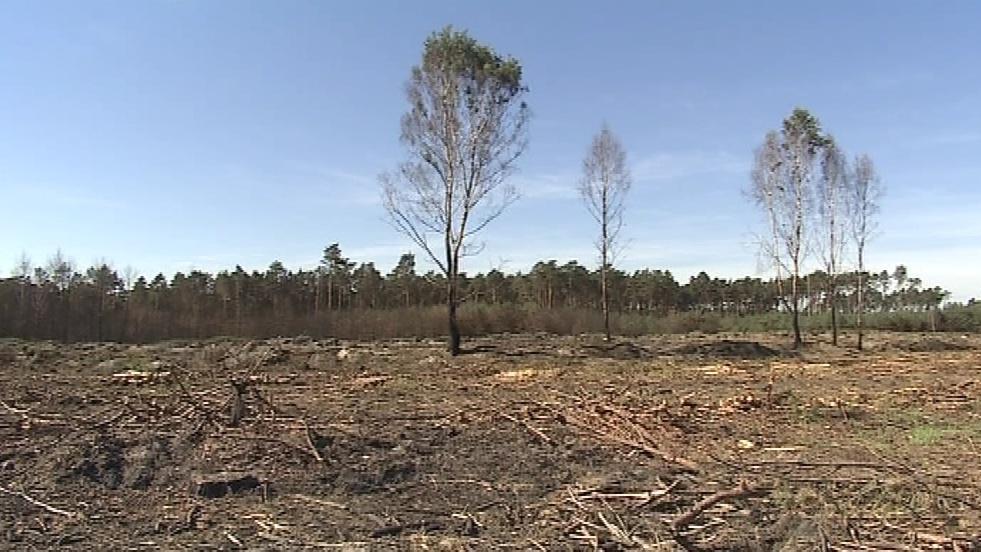 Většina stromů šla k zemi