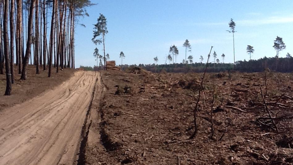 Část lesa už padla