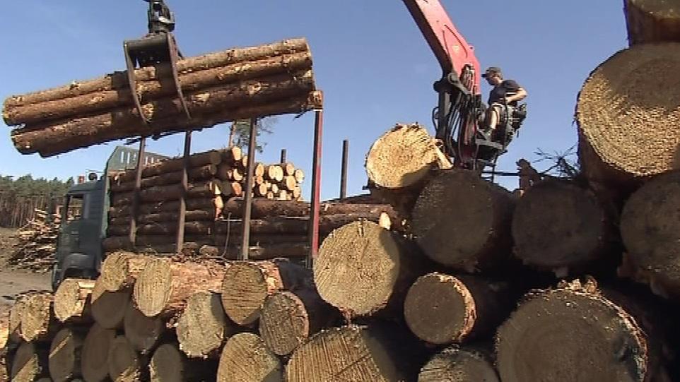 Lesnické práce v Bzenci