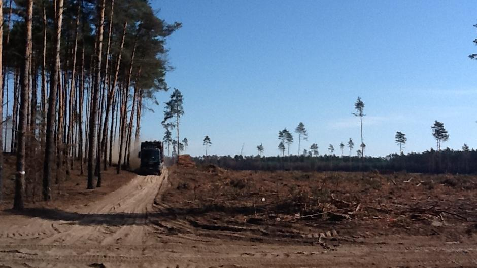 Nákladní vozy už svážejí pokácené borovice