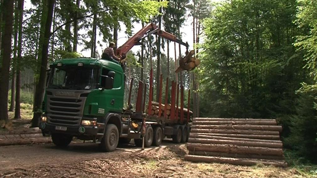 Poškozené stromy už se těží