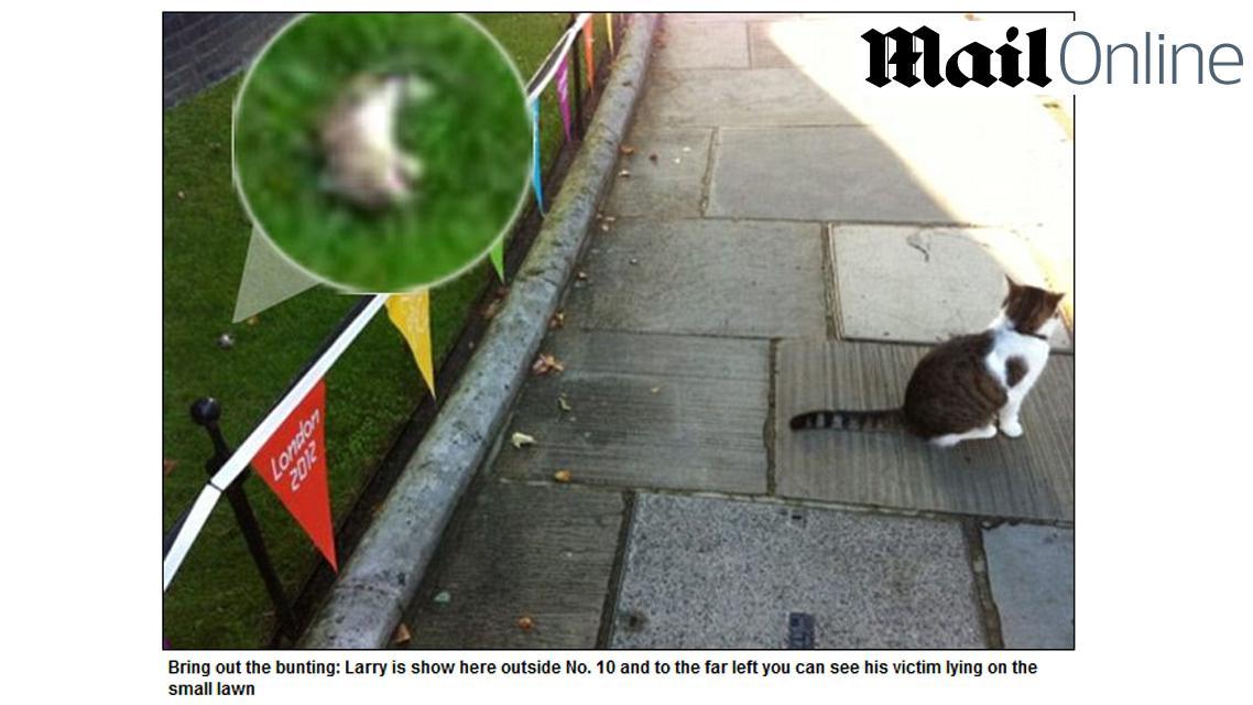 Kocour Larry ulovil první myš