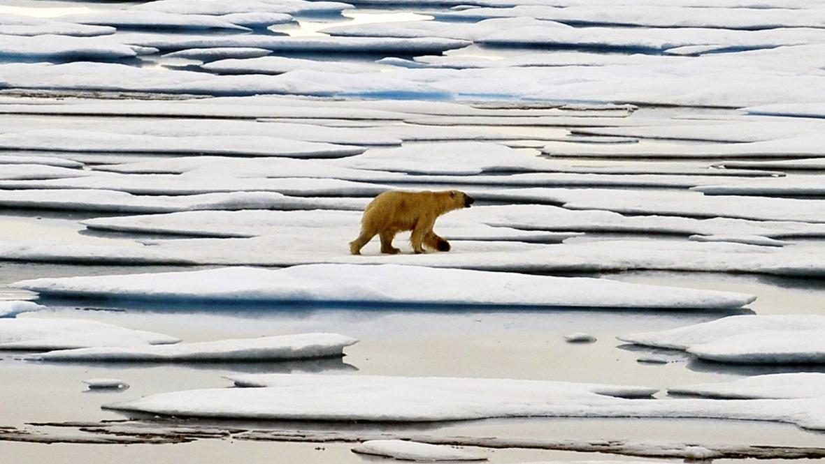 Tání ledu v Arktidě