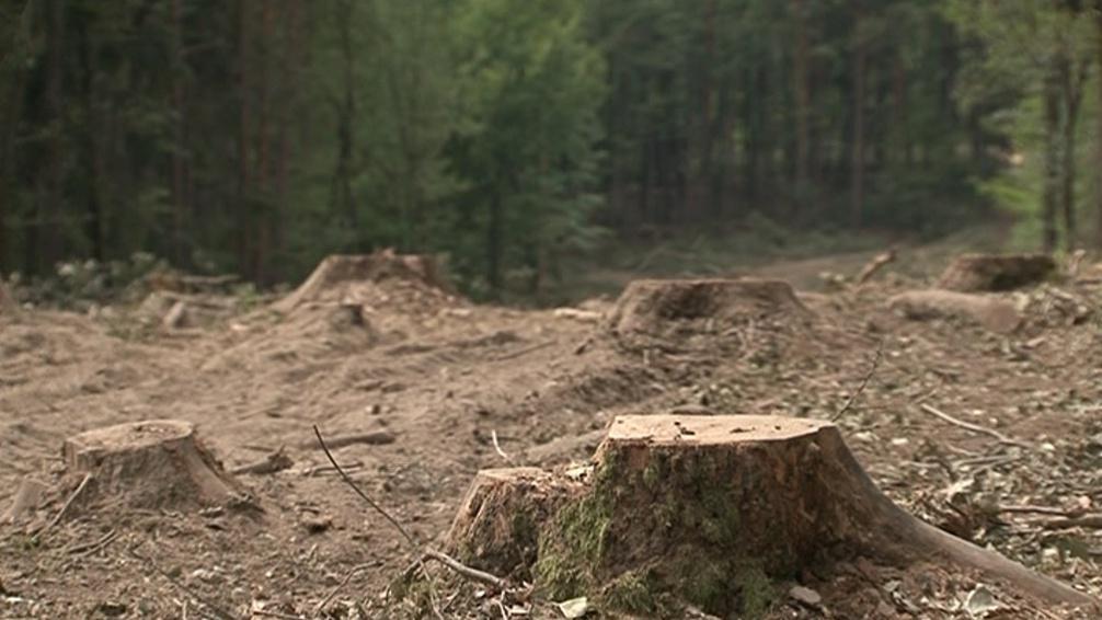 Vytěžena měla být maximálně třetina stromů