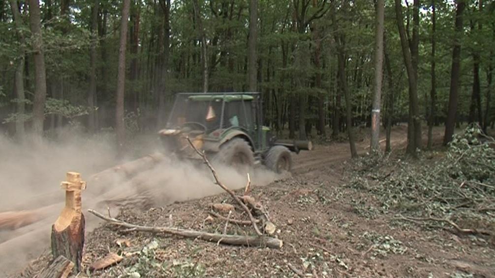 Na následné zalesnění mají majitelé dva roky