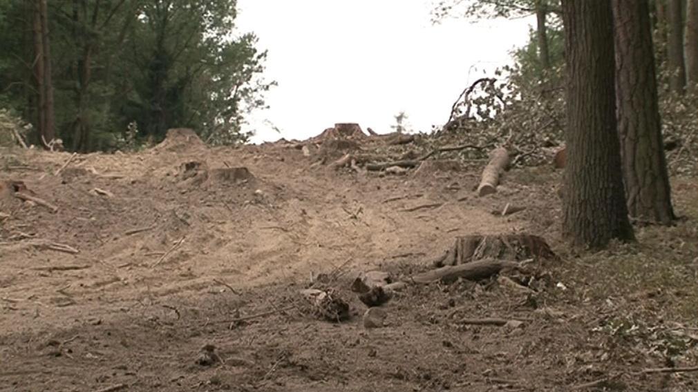 Plošné vykácení může způsobit další škody i v budoucnu