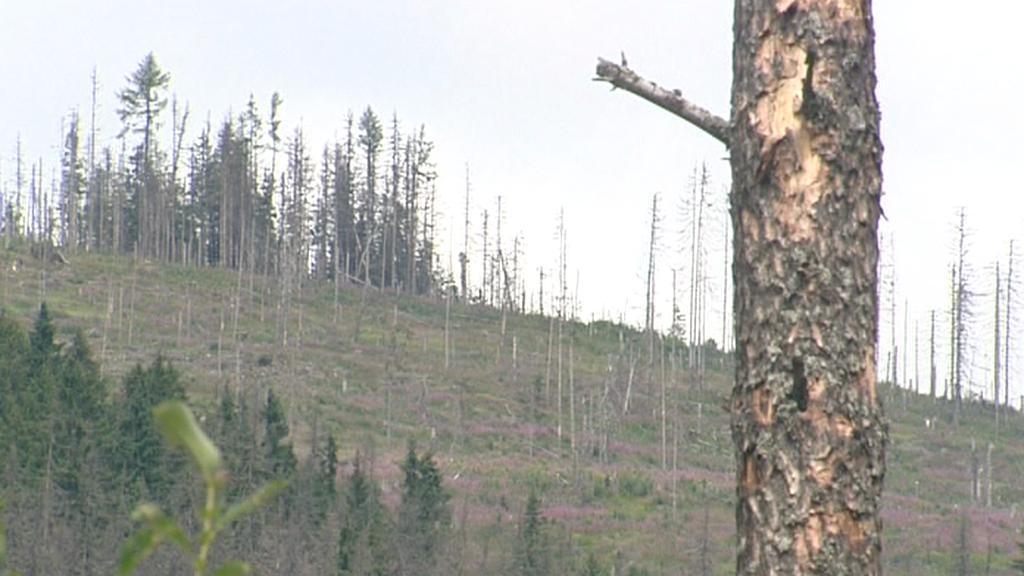 Suché stromy