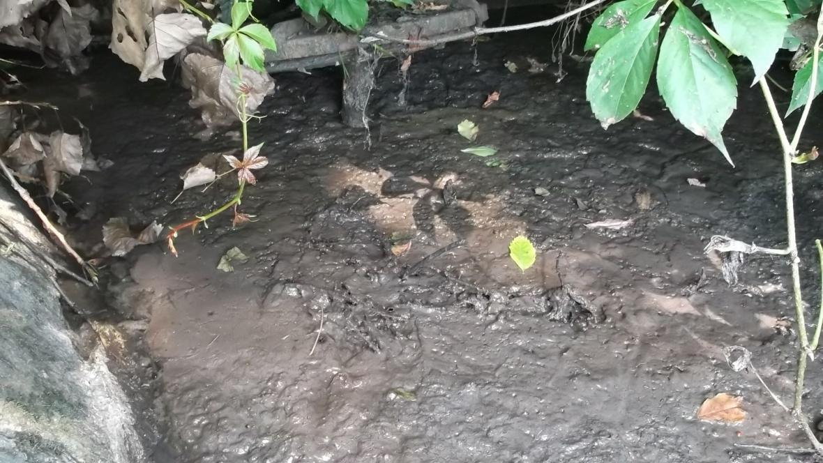 Z čistírny odpadních vod unikly do Svratky kaly