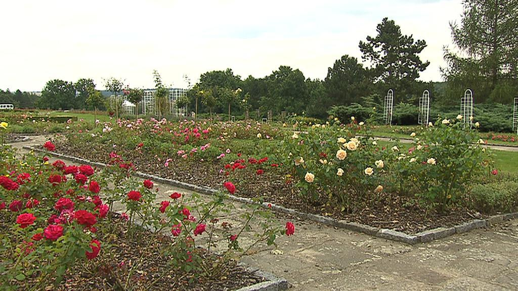 Růžový sad v Lidicích