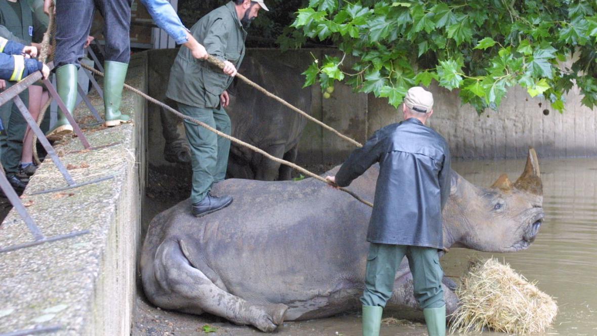 Záchrana zvířat ze zaplavené zoo