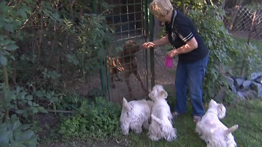Větší psi jsou ve venkovních kotcích, menší uvnitř