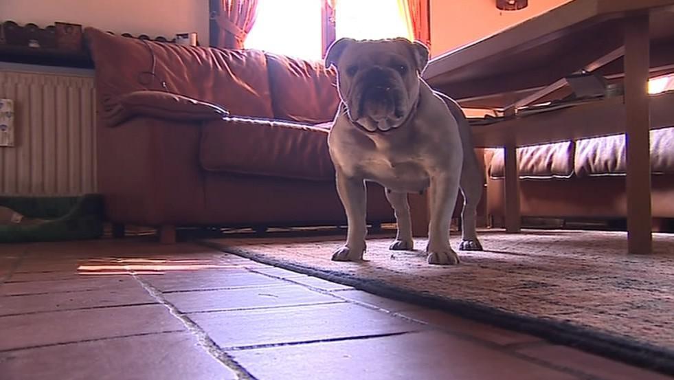 Psi mohou bydlet uvnitř nebo v kotcích