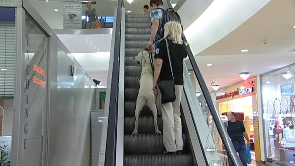 Vodicí pes je zvyklý je různá prostředí