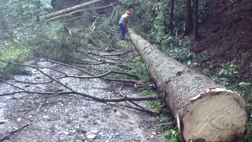 Nedaleko dětského tábora spadlo několik stromů