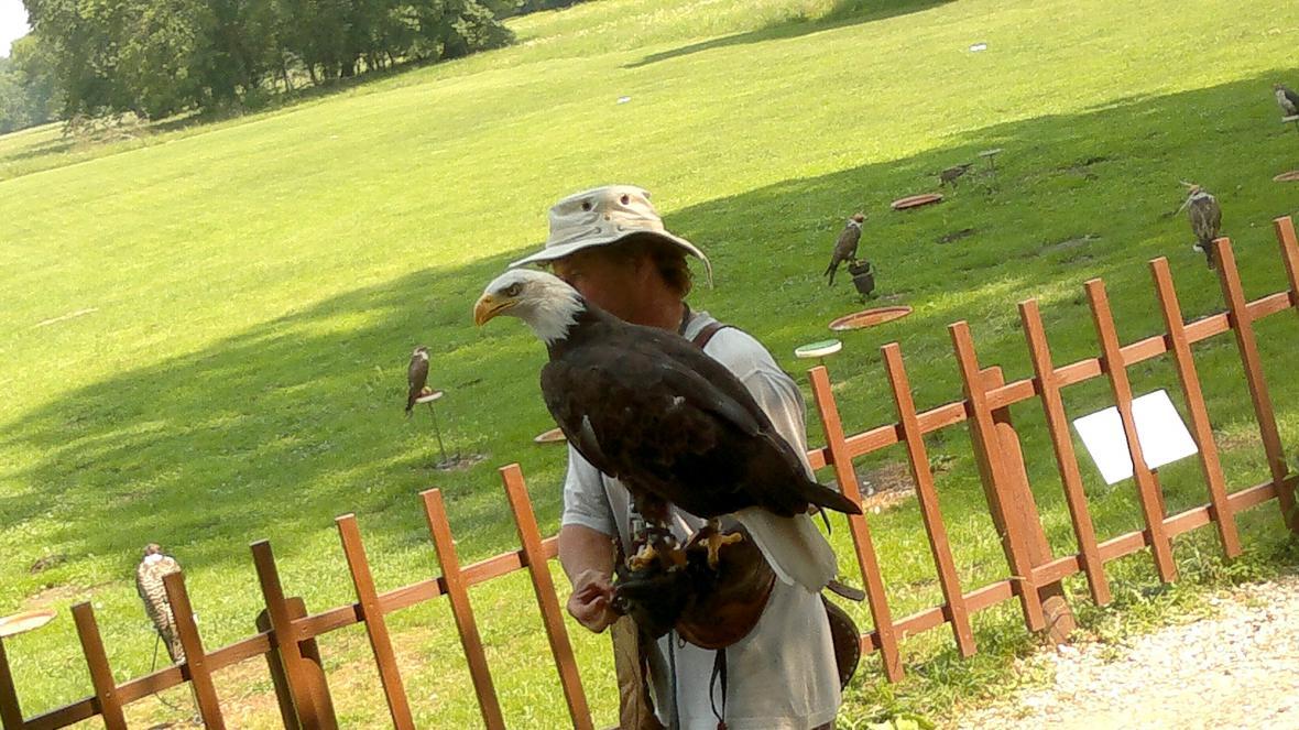 V lednickém parku potkáte i orla