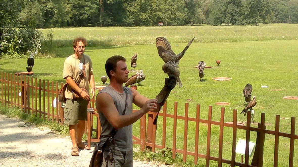 Na show s dravci se předvádí i sova