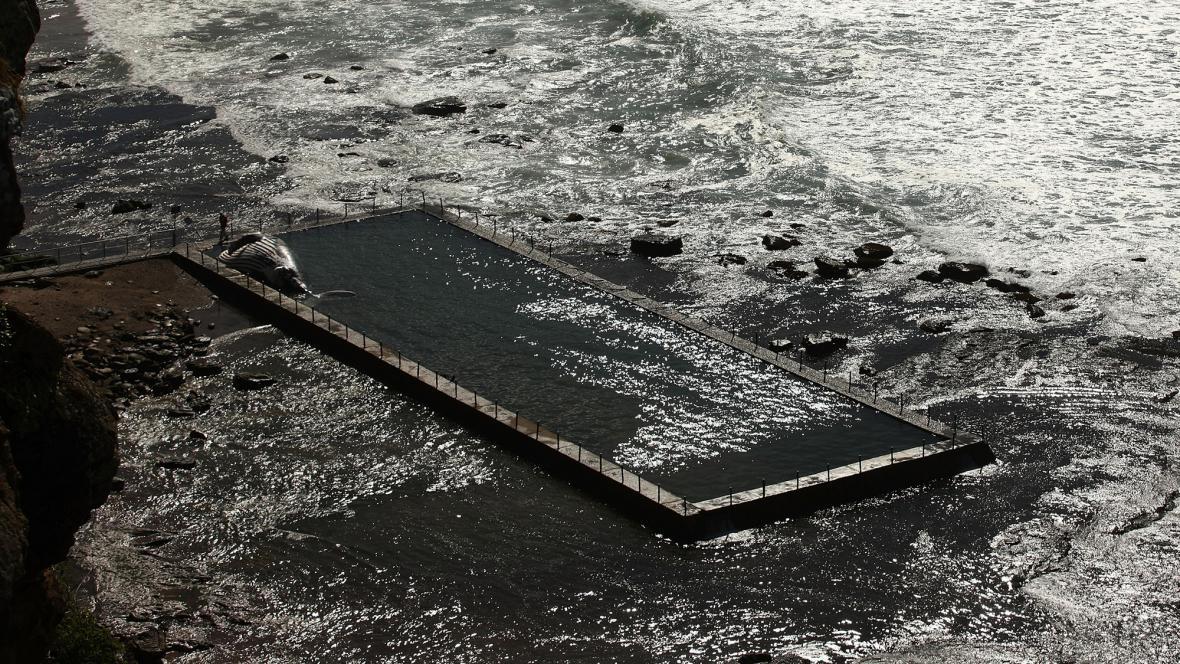 Moře vyvrhlo velrybu do bazénu