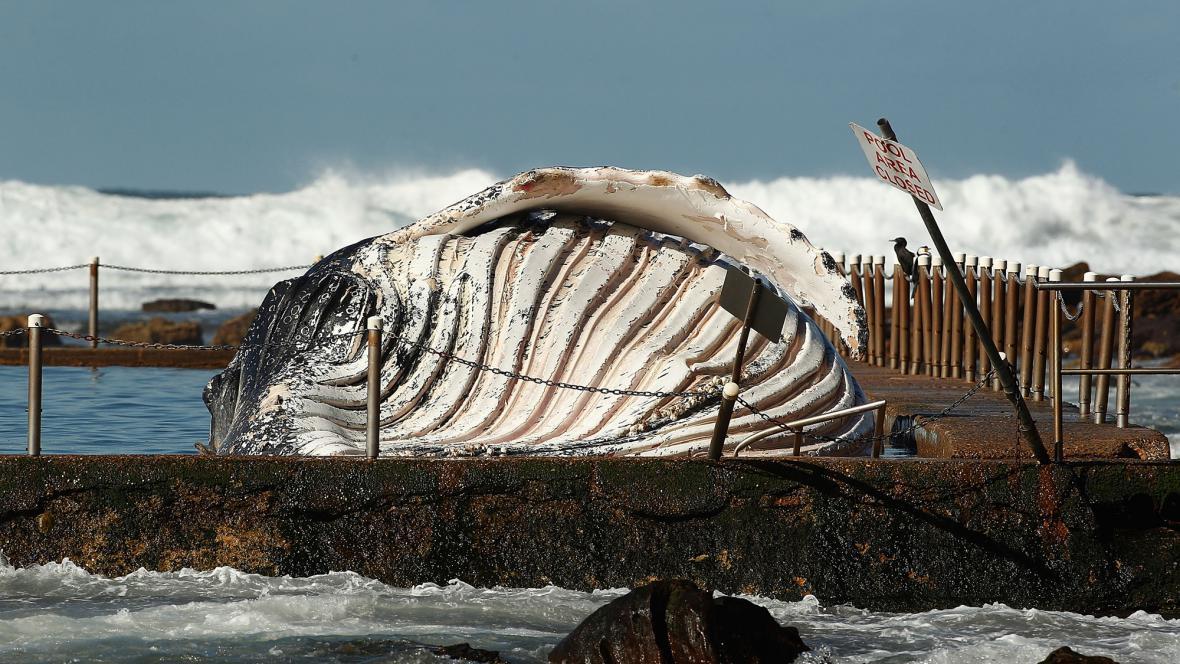 Moře vyrhlo velrybu do bazénu