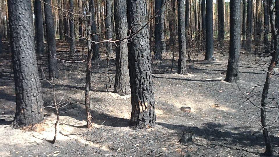 Les u Bzence po uhašení požáru