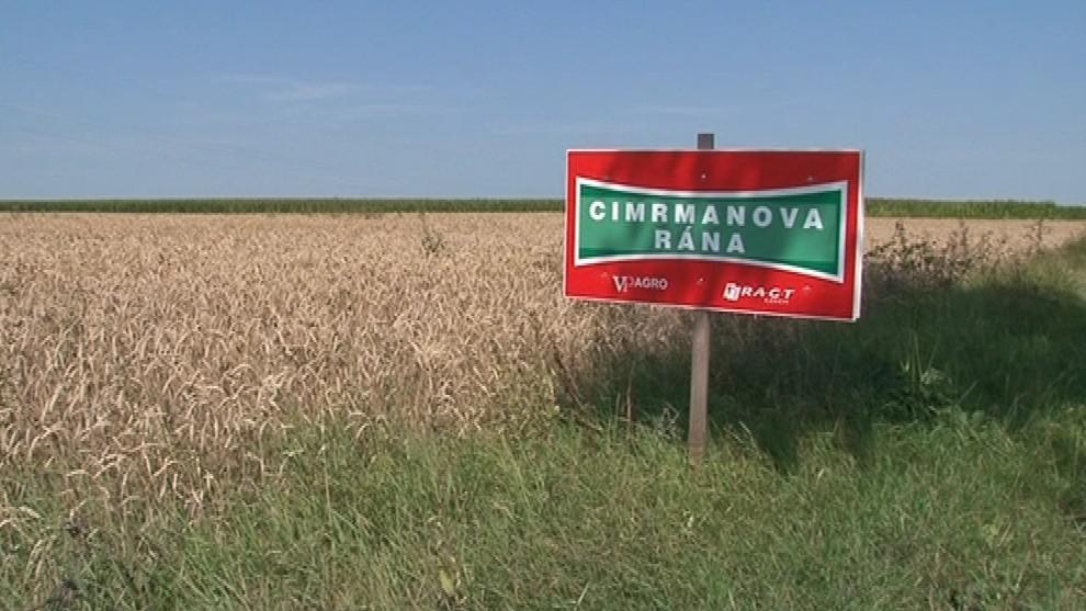 Jára Cimrman má vlastní odrůdu pšenice