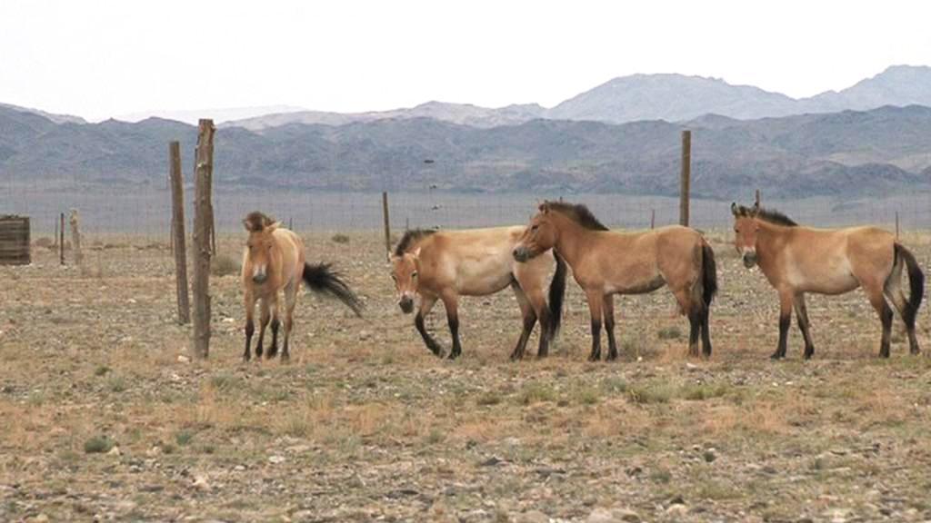 Anežka, Spela, Xara a Greta v mongolské stepi