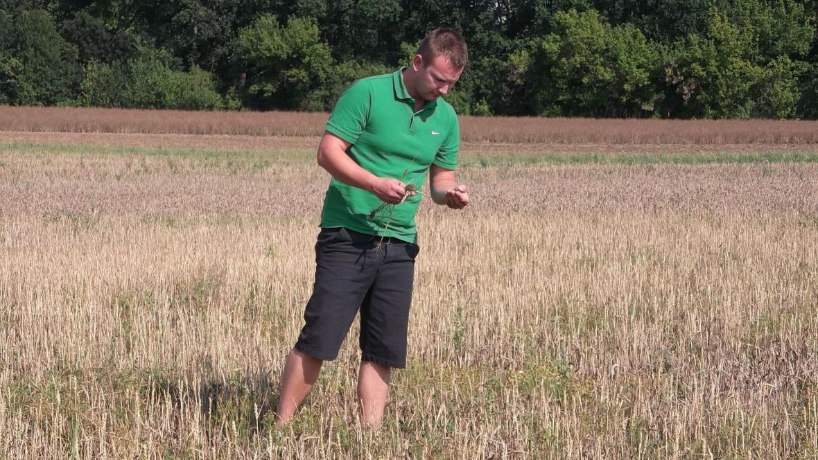 Jiří Vokurka na poli s pšenicí
