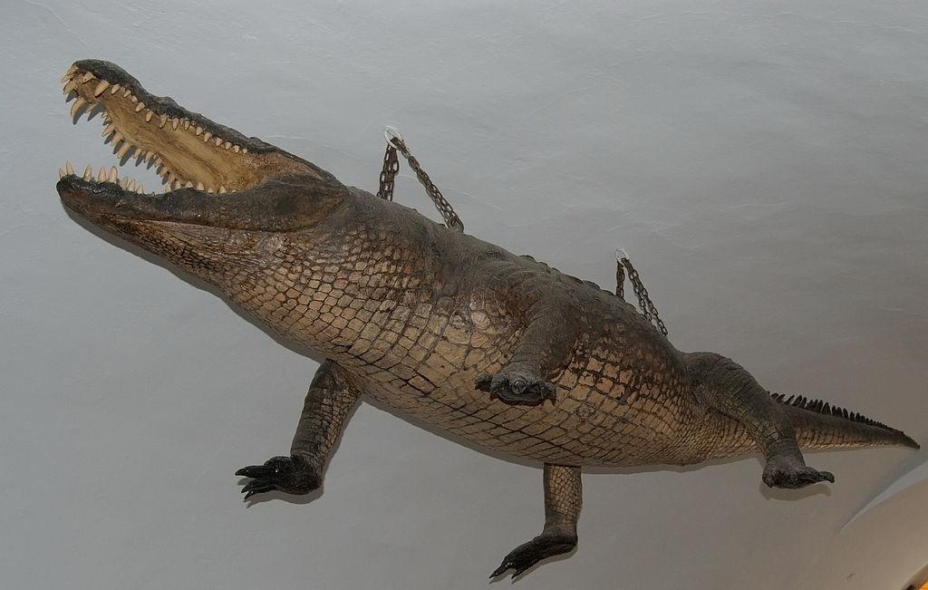 Brněnský drak (krokodýl)