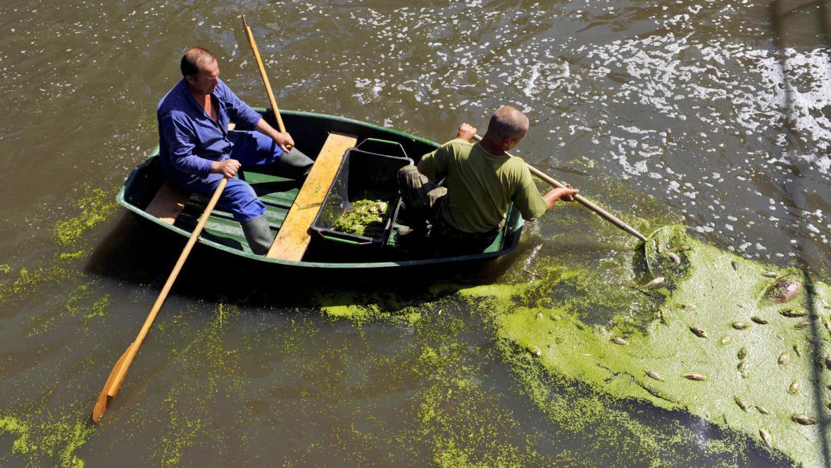 Olomoučtí rybáři vybírají uhynulé ryby