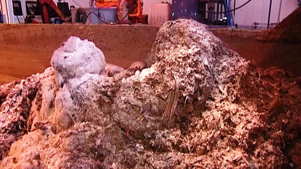Tuky z kanalizace