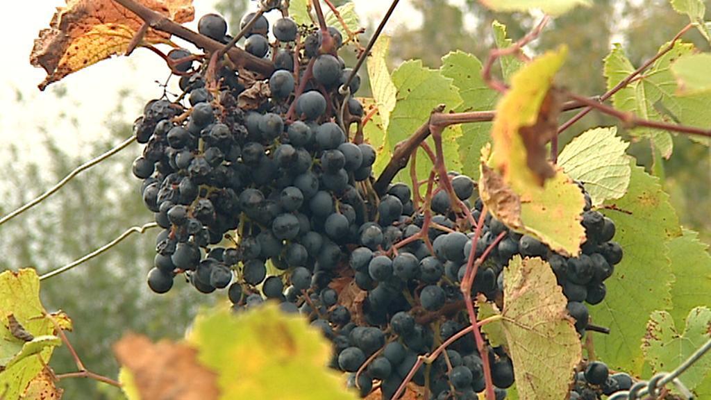 Výstava vína