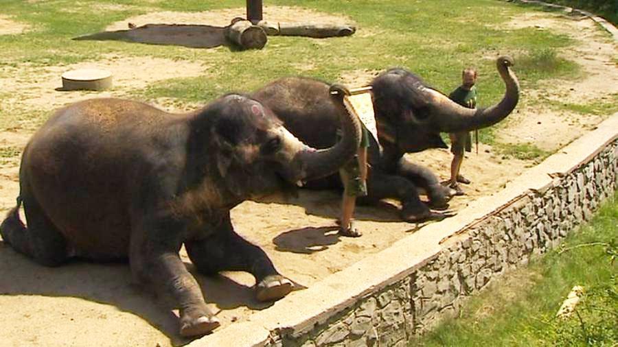 Slonice v ústecké zoo